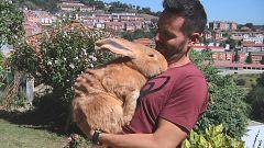 Aquí la tierra - ¡Un conejo gigante!