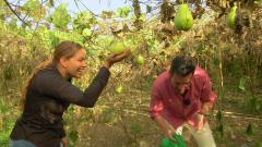 Aquí la tierra - Descubrimos la tayota con la chef María Marte