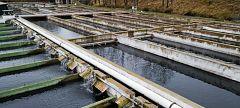 La mañana - ¿Cómo es el pescado criado en piscifactorías?