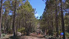Aulaga - Ruta de la Plata - Gran Canaria