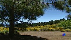 Aulaga - La Calderilla - Santa Lucía de Tirajana - Gran Canaria