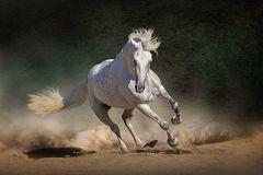 España Directo - Salón Internacional del Caballo de Pura Raza