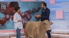 ¿La carne es la mejor fuente de proteínas?