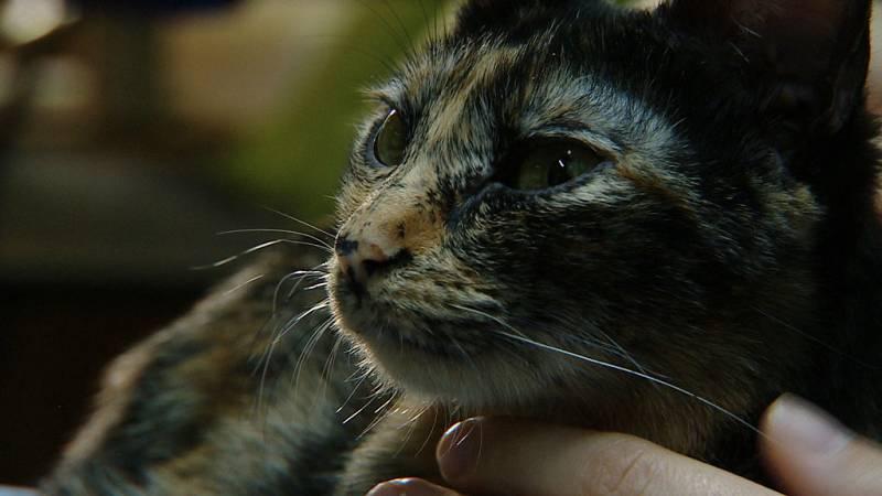 Crónicas - Medicina animal - ver ahora