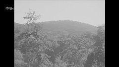 """""""El corcho en Cortegana (1968)"""