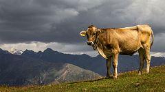 La Mañana - El falso mito de la contribución de las vacas en el cambio climático