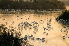 España Directo - Espectáculo de aves en Doñana