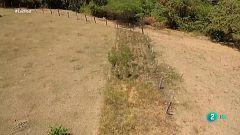 El silvopastoreo, una técnica agropecuaria más sostenible y ecológica