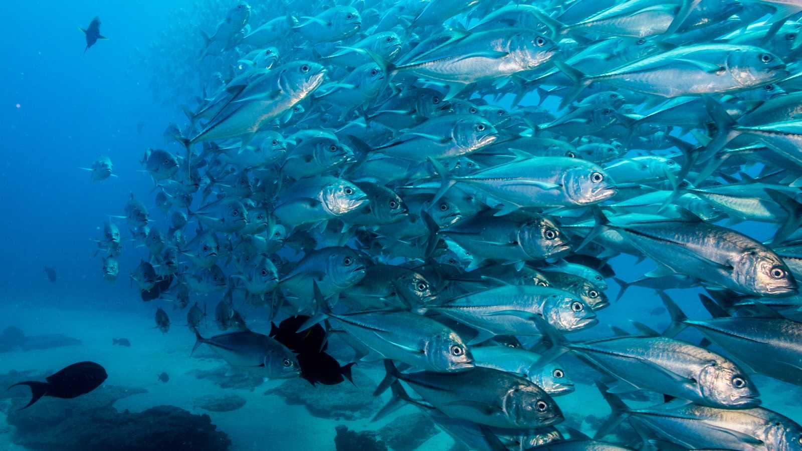 Los océanos pierden oxígeno por el aumento de temperatura
