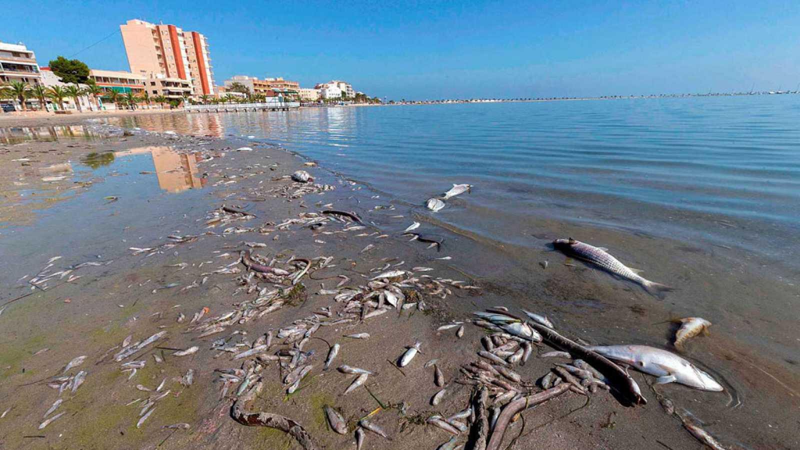 Informe Semanal - Salvar al Mar Menor - ver ahora