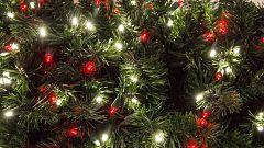 La concienciación ecológica anima la venta de abetos naturales en Navidad