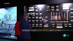 El último panda europeo vivió en Teruel