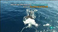 Más de un tercio de los mamíferos marinos está en peligro de extinción