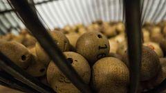 La Mañana - Llegan los bombos de la Lotería de Navidad