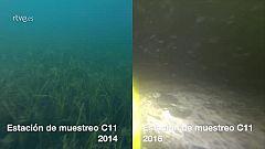 Los fondos esquilmados del Mar Menor