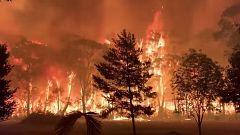 El fuego calcina ya más de 100 hectáreas en Australia desde noviembre