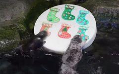 Los animales también reciben sus particulares regalos por Navidad