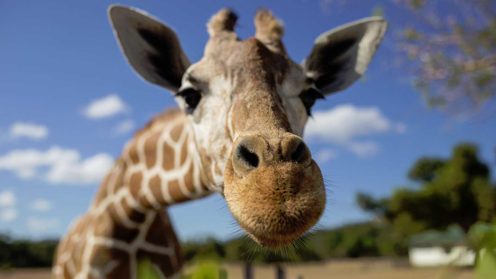 Más de 22.000 personas compran un zoo francés para liberar a sus ...