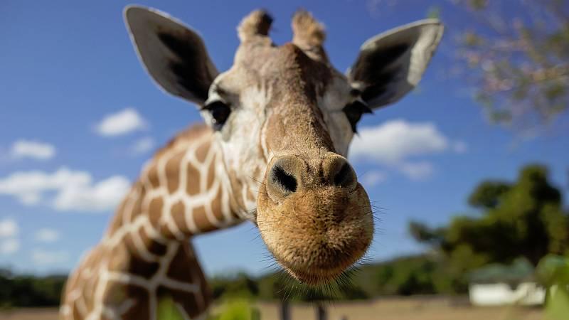 Una colecta lanzada en Franciapara comprar un zoo en la región de Bretaña con el fin de liberar a sus animalesy convertir el lugar en un centro de rehabilitación animal ha superadosu objetivo de llegar a los 600.000 euros.