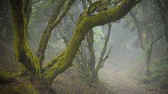 La niebla persiste en zonas del interior, con pocas nubes en general