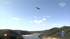 España Directo - El Parque Nacional de Monfragüe, un paraíso para los buitres