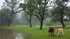 Precipitaciones persistentes en el oeste del sistema Central