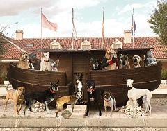 Para Todos La 2-Fundación El Arca de Noé. Adopciones de animales