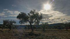 Aquí la tierra - Apadrina un olivo