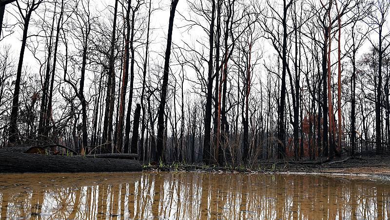 La lluvia alivia los fuegos en Australia, aunque ahora preocupan las inundaciones