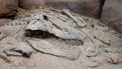 Un asteroide mató a los dinosaurios y no la acción de los volcanes
