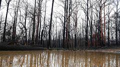 La lluvia, gran aliada contra los incendios en Australia