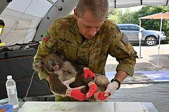 Los incendios australianos dejan contra las cuerdas a los koalas en Nueva Gales del Sur