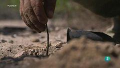 Científicos trabajan para reconvertir el desierto en bosque