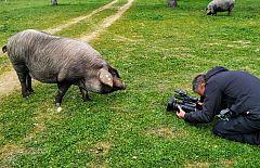 Aquí la Tierra - El gran cerdo ibérico torbiscal