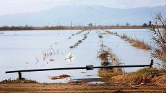 Los agricultores evalúan los daños de la borrasca 'Gloria' en el delta del Ebro