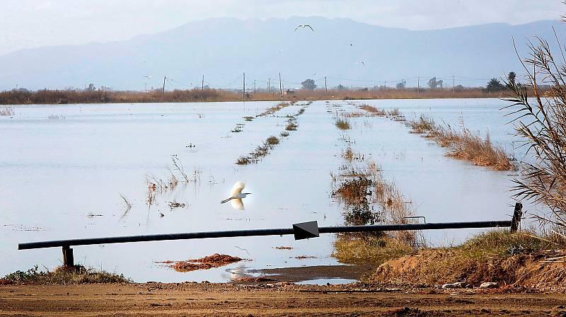 Daños en la agricultura del delta del Ebro