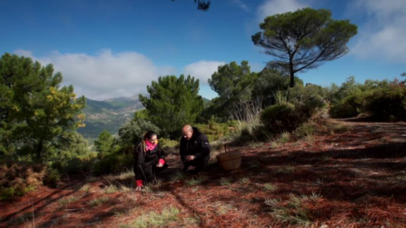 El señor de los bosques - Sierra de Huetor (Granada) - ver ahora