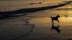 Las temperaturas máximas subirán en el interior de Andalucía, meseta Norte, valle del Ebro y litoral cantábrico