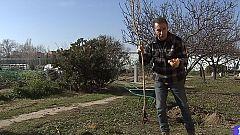 Aquí la Tierra - Cómo plantar un granado