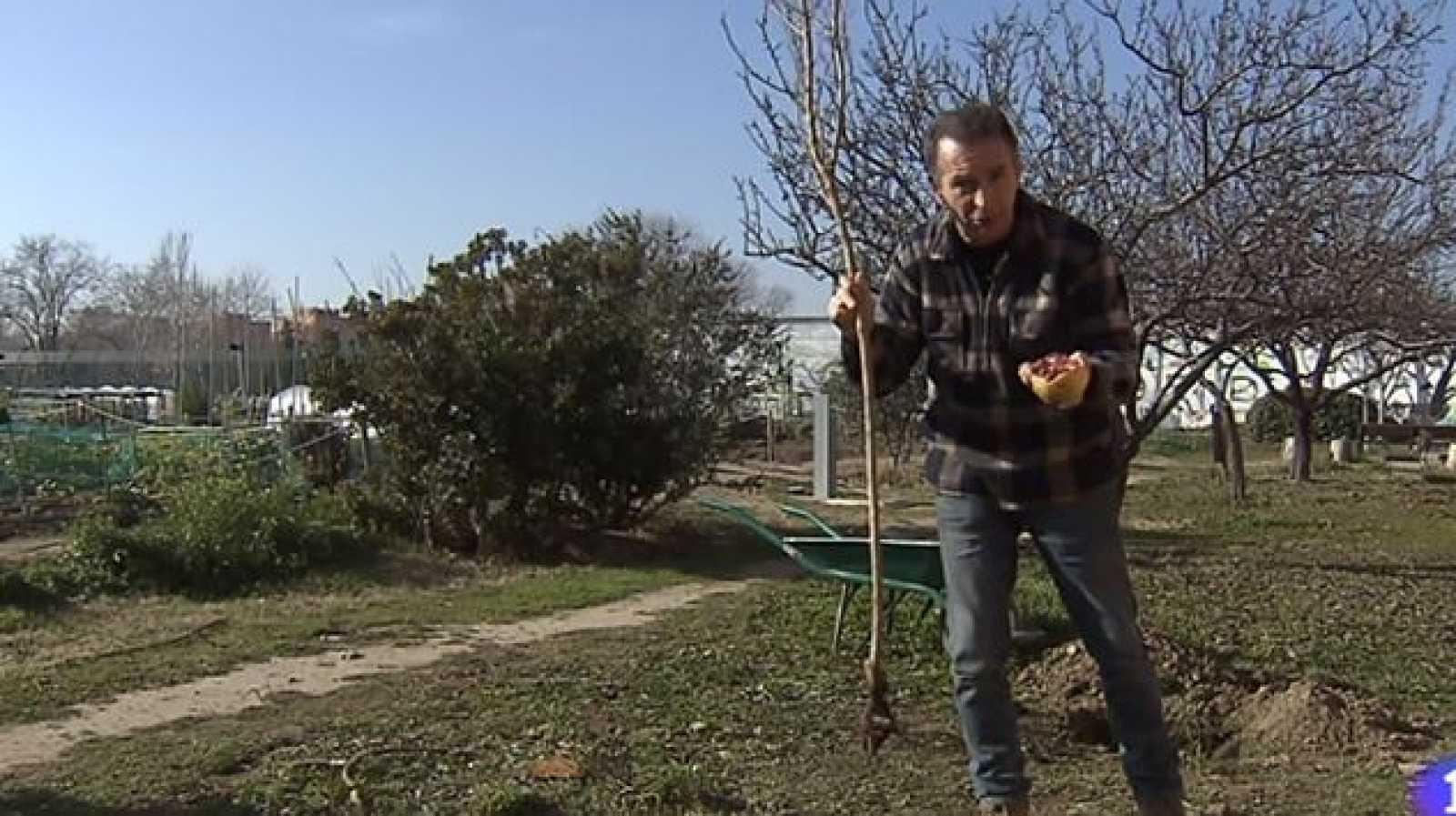 Cómo plantar un granado