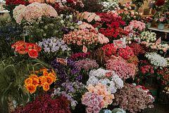 España Directo - Flores para San Valentín