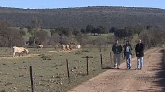 Carolina Fernández y su carne cardiosaludable: premio al 'Joven Agricultor 2020'