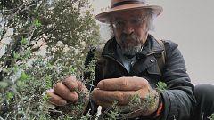 Aquí la Tierra - Juan Plantas y los beneficios del tomillo