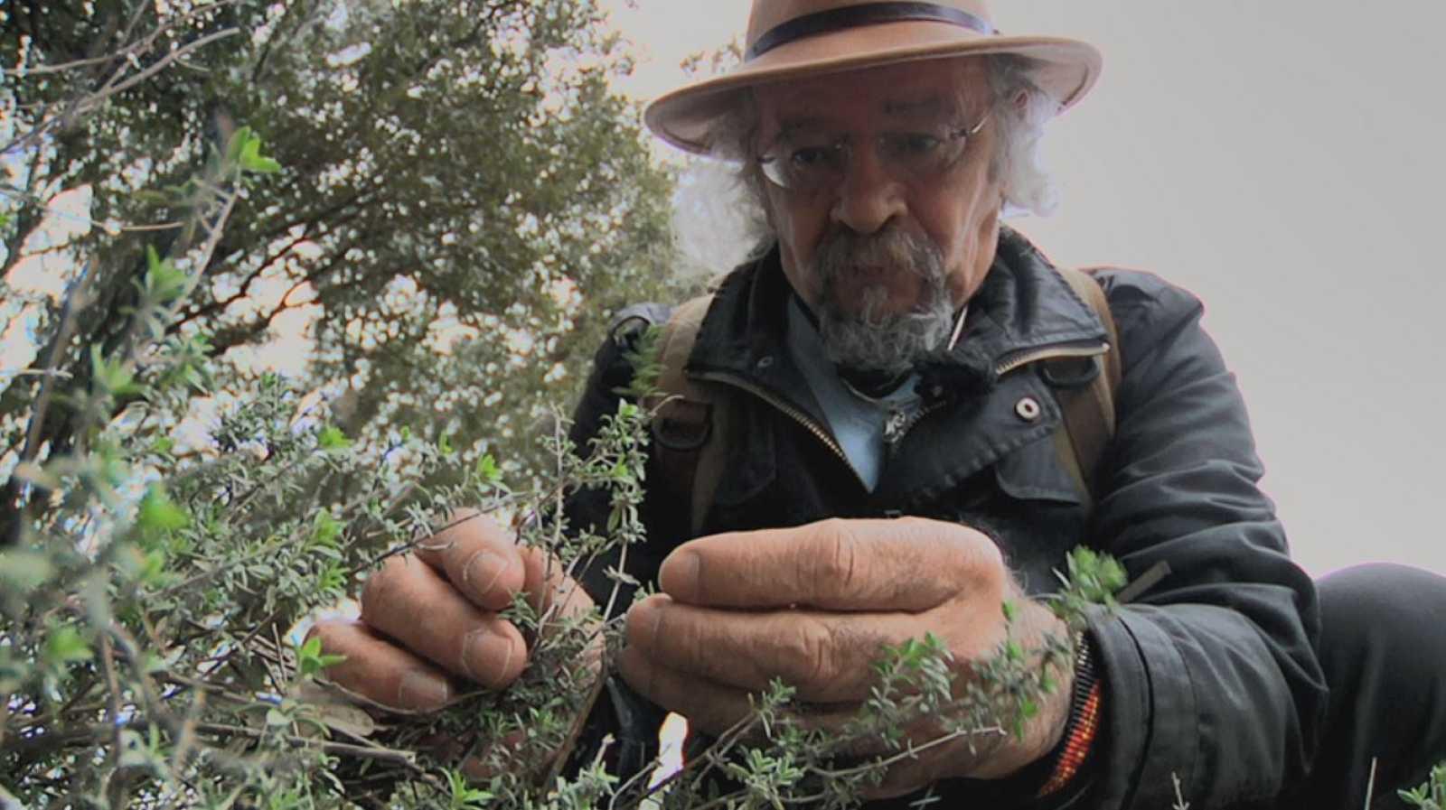 Juan Plantas y los beneficios  del tomillo