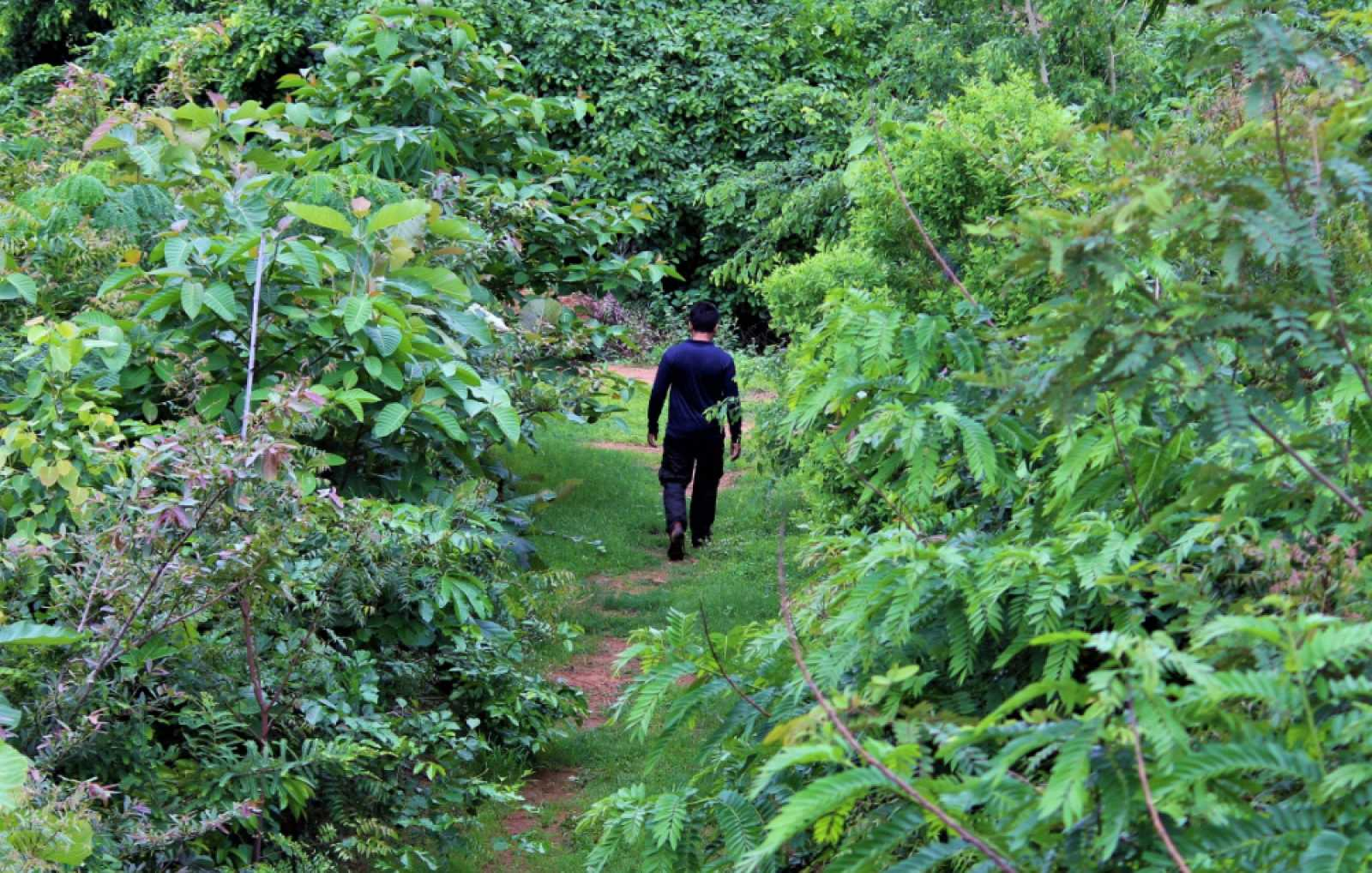 Crear mini bosques en zonas urbanas