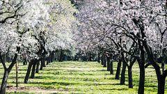 España Directo - La primavera se adelanta en el Parque Quinta de los Molinos