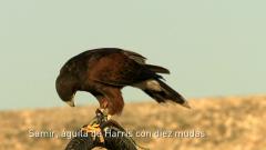 Jara y sedal - Pico a viento
