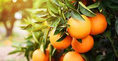 España Directo - Naranjas eléctricas