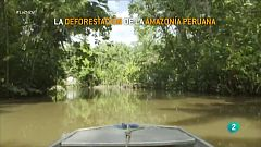 La deforestación de la Amazonía avanza a pasos agigantados