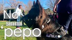 No sin mi 'pepo': víctimas de violencia machista piden abrir todas las puertas a sus perros de protección